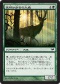 夜明け歩きの大鹿/Dawntreader Elk [DKA-JPC]