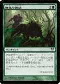 野生の抵抗/Wild Defiance [AVR-JPR]