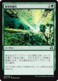 爆発的植生/Explosive Vegetation [EvK-JPU]