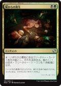 屍からの発生/Necrogenesis [MM2-JPU]