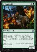 火打ち蹄の猪/Flinthoof Boar [EMA-JPU]