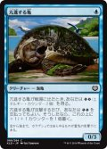 【FOIL】亢進する亀/Thriving Turtle [KLD-JPC]