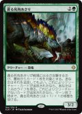 【FOIL】貪る死肉あさり/Deathgorge Scavenger [XLN-JPR]