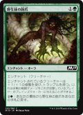 【FOIL】野生林の鉤爪/Talons of Wildwood [M19-JPC]