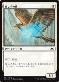 【FOIL】癒し手の鷹/Healer's Hawk [GRN-JPC]