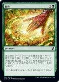 耕作/Cultivate [C19-JPC]