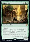 巨大オサムシ/Giant Adephage [C19-JPM]