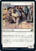 【FOIL】駐屯地の猫/Garrison Cat [IKO-JPC]