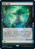 霧深い雨林/Misty Rainforest [ZNR-JPE]