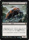 葬儀甲虫/Mortician Beetle [ROE-JPR]